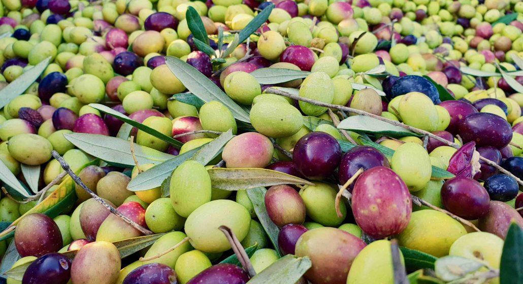 Duikersdrift Olives 2